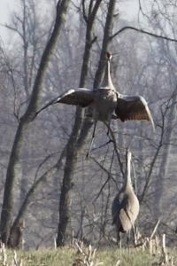 Jumping crane